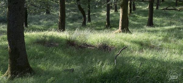 The Quiet Wood