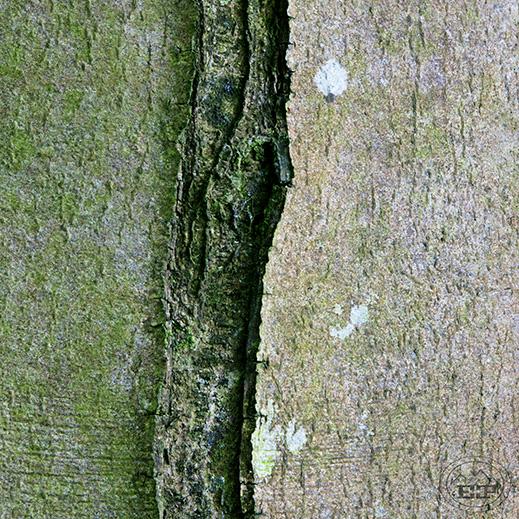 The Quiet Wood 5