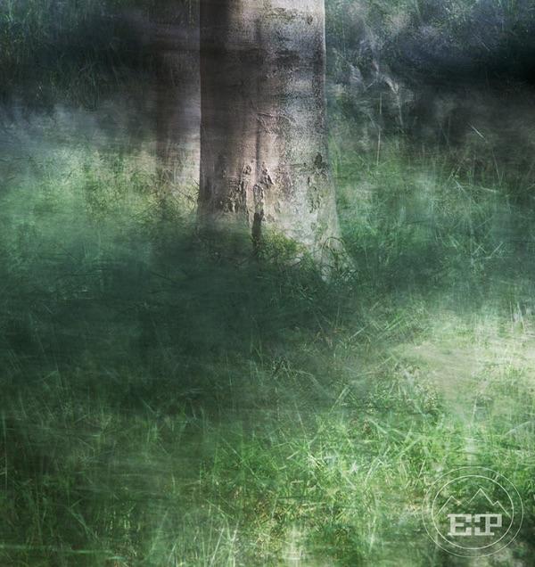 The Quiet Wood 6