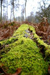 Greener Moss