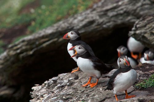puffins seaside bb ballinskelligs 2