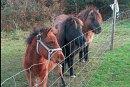 seaside bb ballinskelligs ponies 2