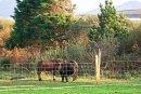seaside bb ballinskelligs ponies