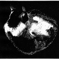 'Sleeping Cat', Limited edition of 100 prints, w.14 x h.13.3cm