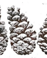 'The Scots Pine', Limited edition of 10 prints, w.28.5 x h.11.7cm (unmounted)