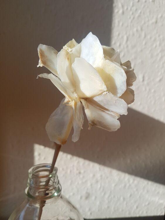 Rose (Detail, 2020)