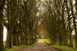 Lanark Tree Lane