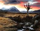 Lone Tree on Rannoch Moor
