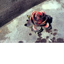 Stone red rose
