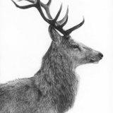 Stag Profile
