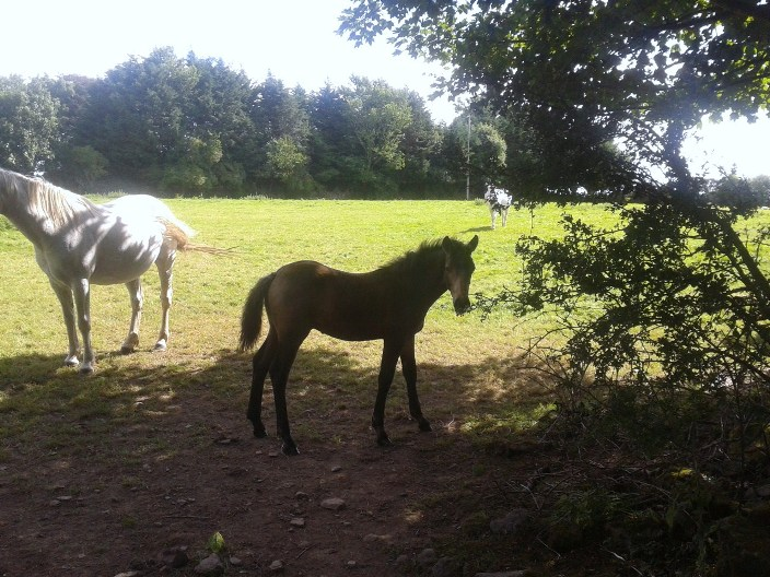 2013 colt ex 'Holiday Silver Bell'