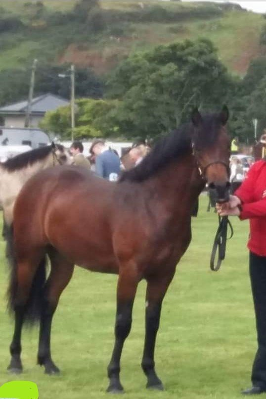 New 3yo Colt, to go for inspection in Autumn