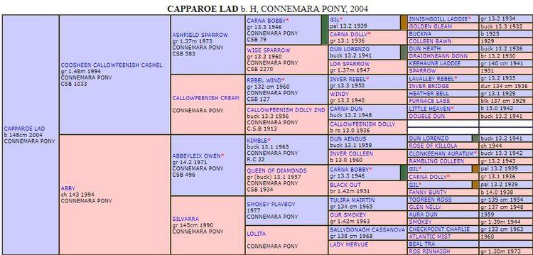 Pedigree of Capparoe Lad
