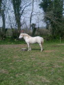 Ballyard Prince, [March 2011]