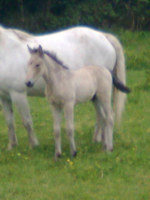 Beauty and Colt foal by Bearna Rua Temple
