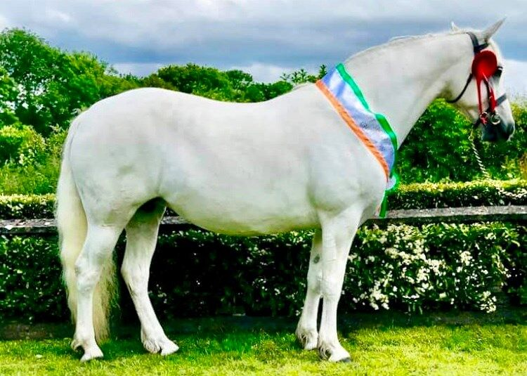 Lockinge Clover--- Champion Mare