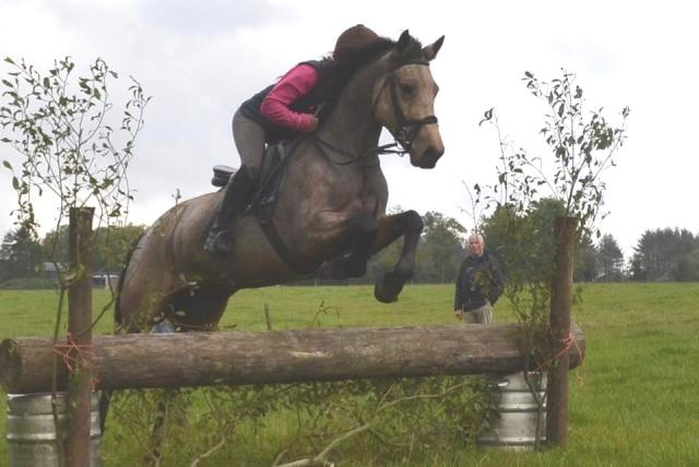This 4yo mare is by Capparoe Lad.