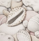 Pebbles, Cowrie and Abalone Shells