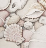 Pebbles, Scallop and Spiral Shell