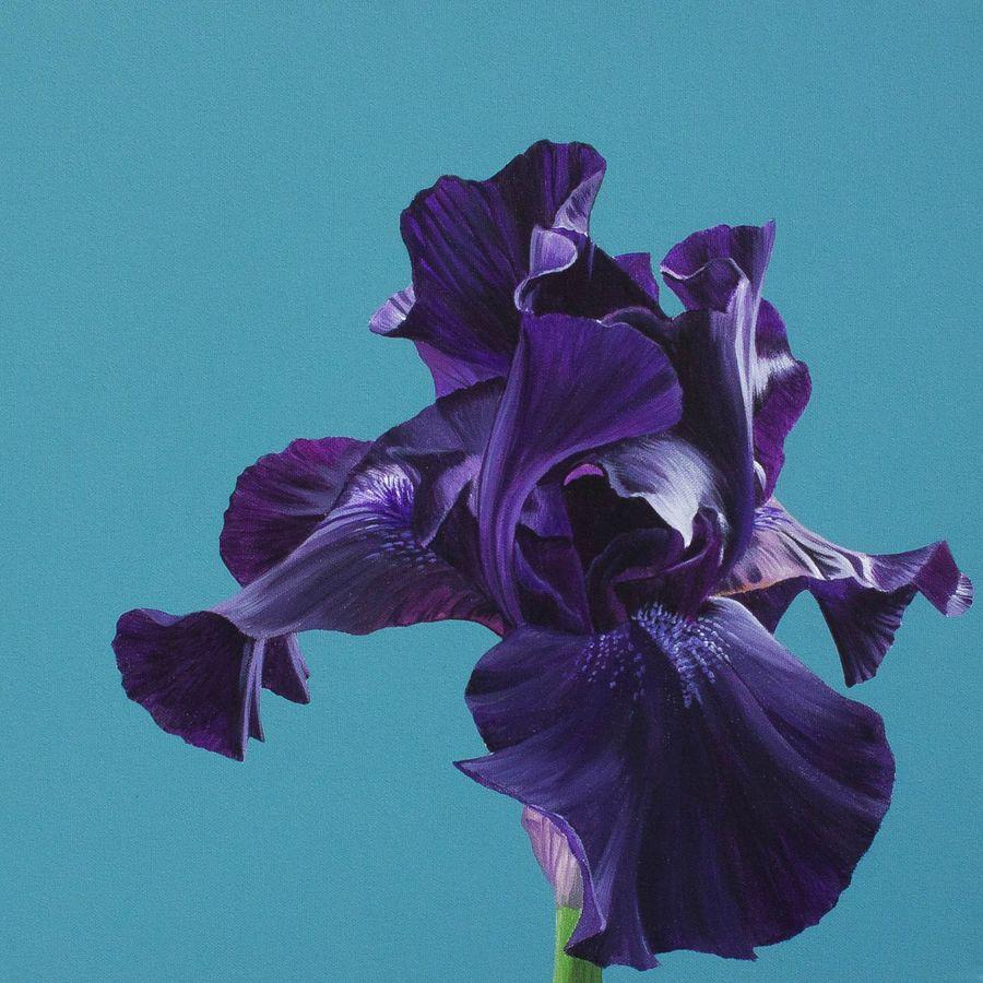 Little black Iris