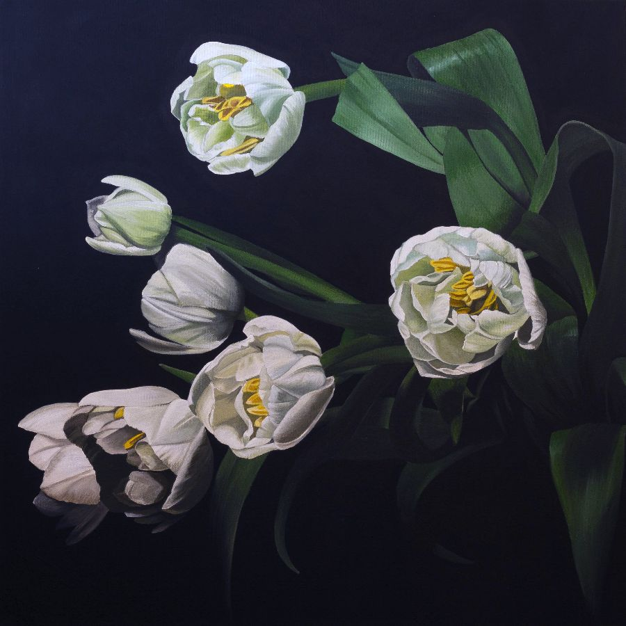 Tulips in shadows