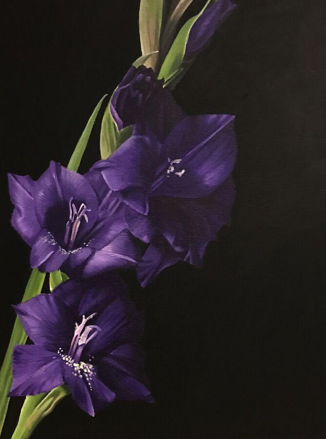 Little Purple Gladioli