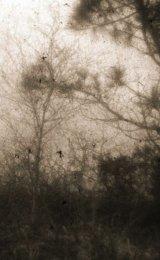 Squarking crows
