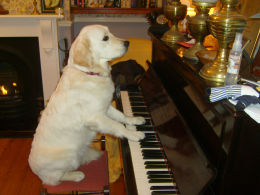 Tula  playing the piano