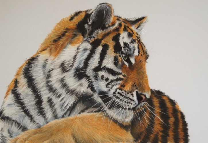 """Amur Tiger"" SOLD"