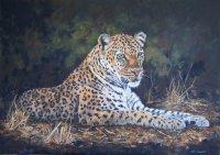 """""""Leopards Lair"""""""