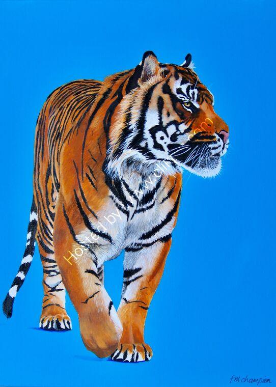 walking tiger on bright blue background