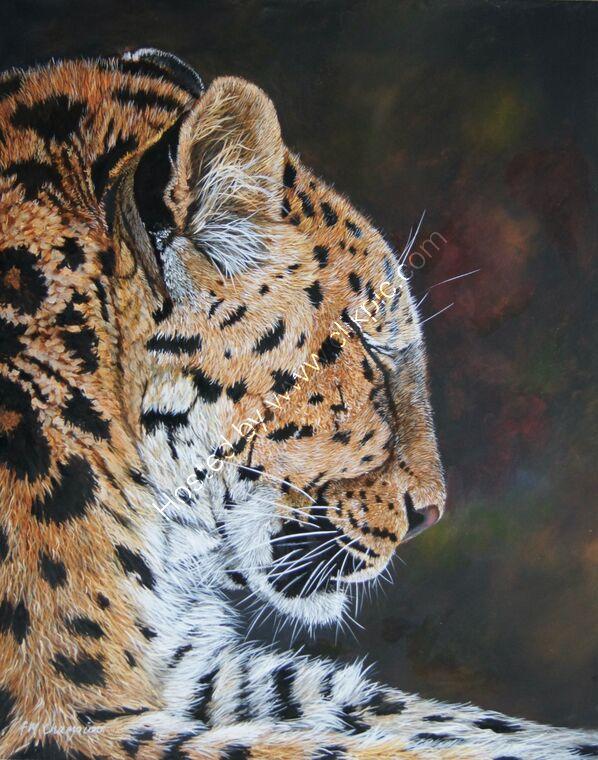Amur Leopard resting