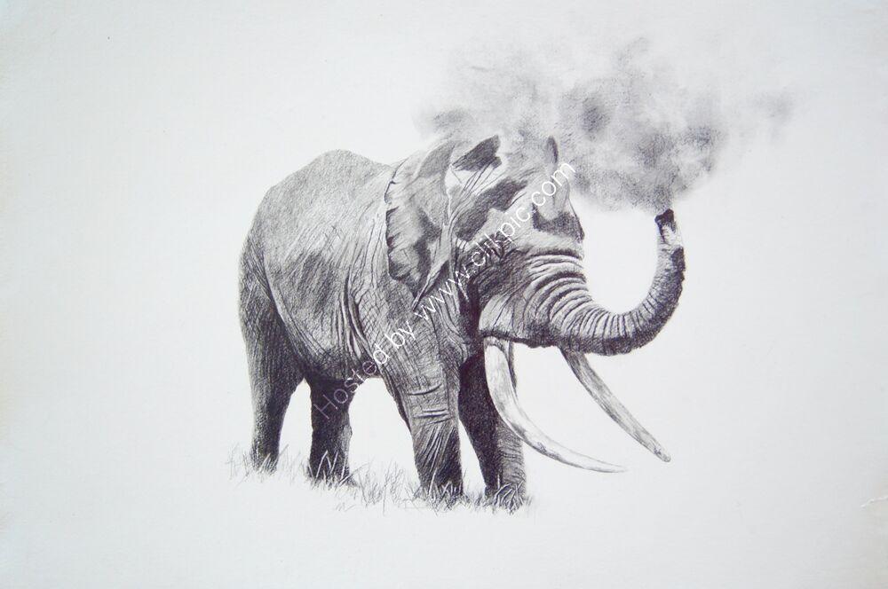 african bull elephant having a dust bath, in graphite