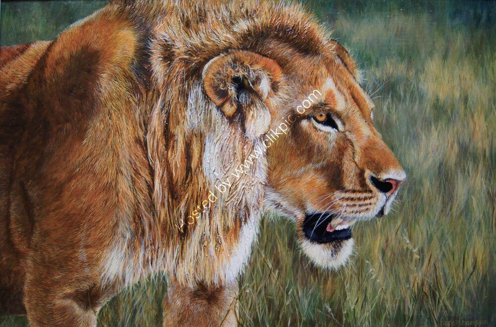 Adolescent lion in bush
