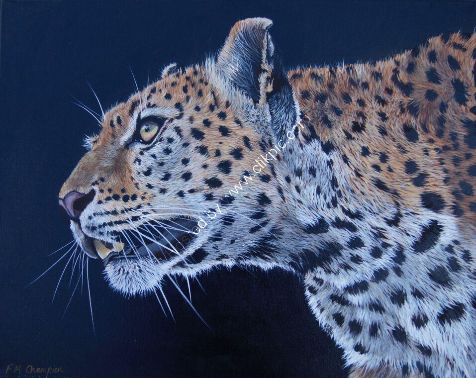 African Leopard on black background