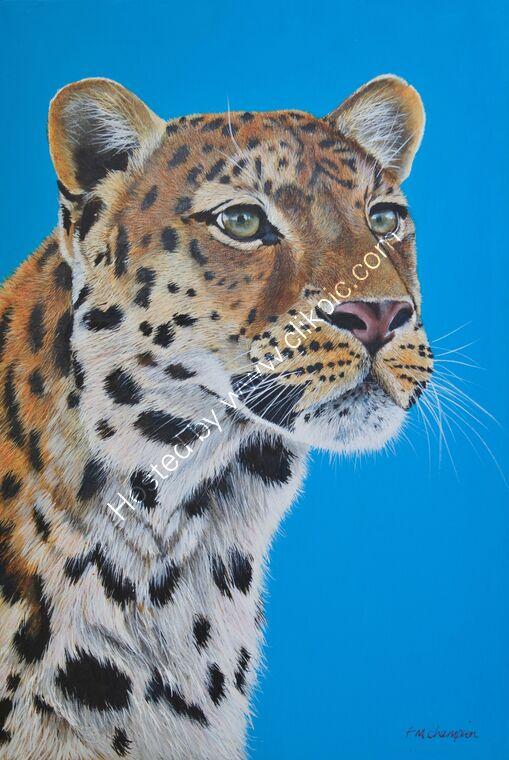 Amur Leopard posing Marwell zoo