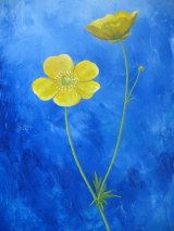 Two Buttercups