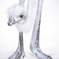 Ostrich extremities
