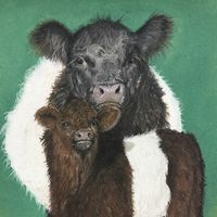 Belted Galloway cow and calf