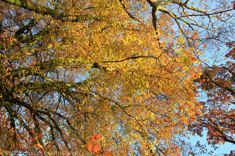 Ballyannon-Woods-Nov-2019 0040