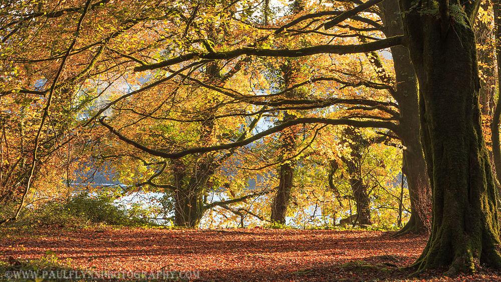 Ballyannon-Woods-Nov-2019 0048