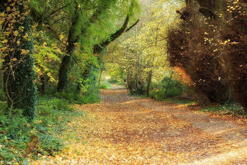 Ballyannon Woods Nov 2019_1
