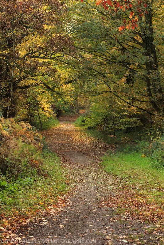 Ballyannon Woods Nov 2019_10