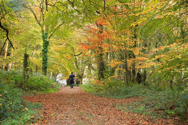 Ballyannon Woods Nov 2020_2