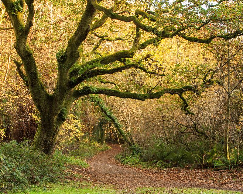 Ballyannon Woods Nov 2020_1