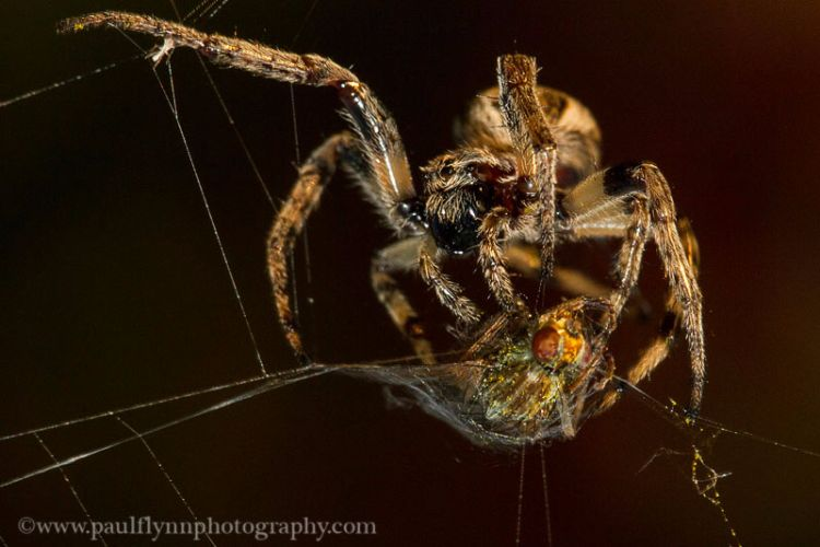 Insects-2015 0837