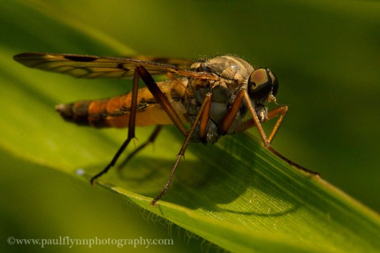 Insects-2015 1010
