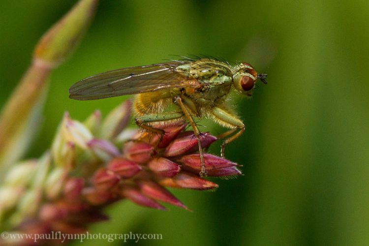 Insects-2015 1074