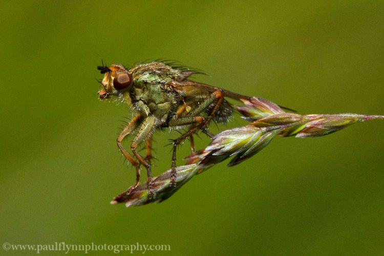 Insects-2015 1099