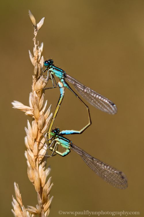 Mating Pair